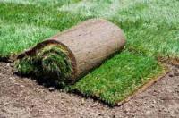 Укладка рулонного газона своими руками: фото инструкция