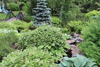 Растения для ландшафтного дизайна на лесном участке