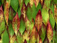 Красота и польза. Энциклопедия лекарственных растений для вашего сада