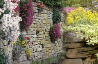 Растения для подпорной стенки