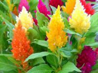 Какие красивые однолетние цветы для дачи посадить на участке?
