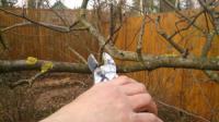 Обрезка плодовых деревьев, необходимость или польза для сада