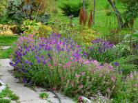 Лекарственные растения для выращивания в саду